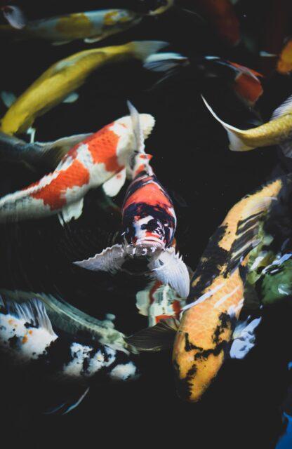 Som fisken i ett annat vatten